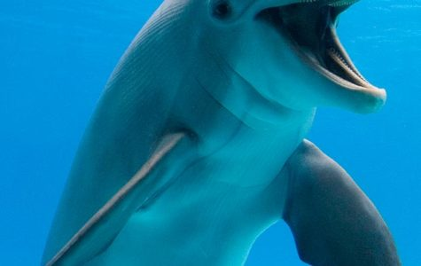 Dolphins Baby Boom after all the Hurricanes