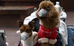 Can Pets Get The Corona Virus?