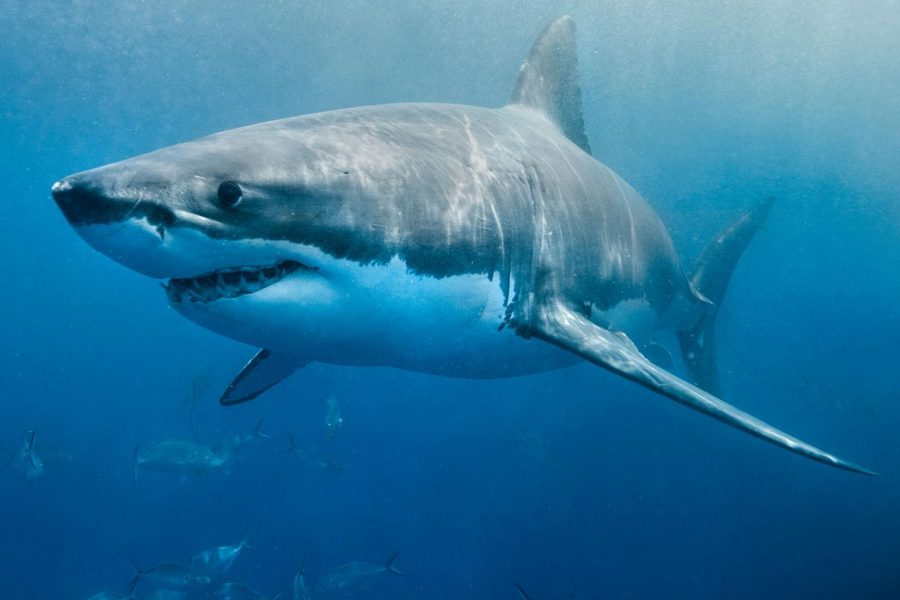 Man+Punches+A+Shark+To+Save+His+Wife%27s+Life