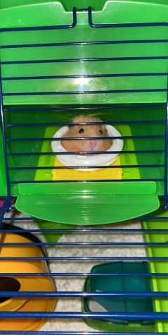 Breaking News: Kenzie Hoffman Gets A New Hamster