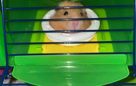 Breaking News: Kenzie Hoffman Gets A New Hamster