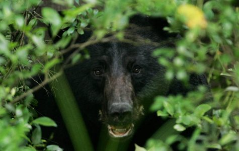 Man survives bear attack after a fight in the kitchen