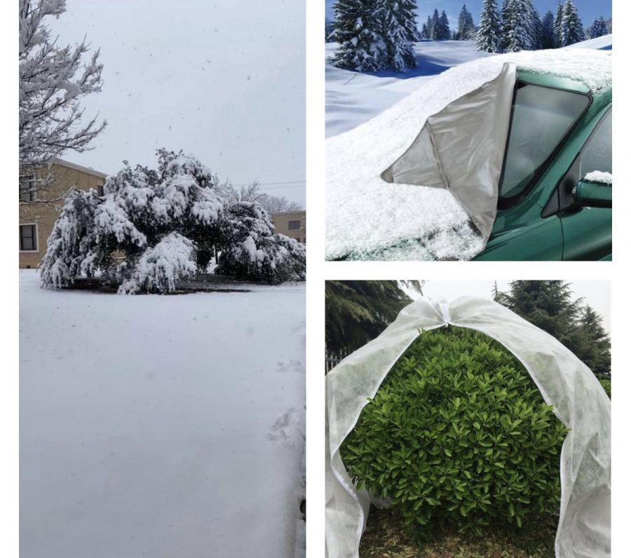 How to protect your plants and cars in cold weather